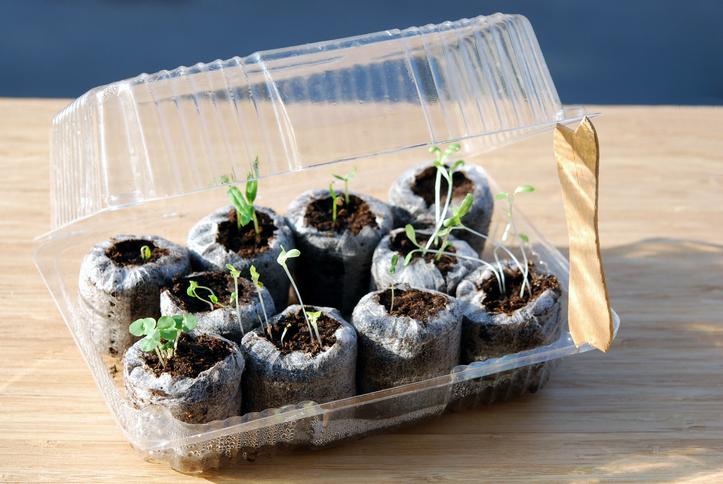 Prepara tu propio invernadero con material reciclado