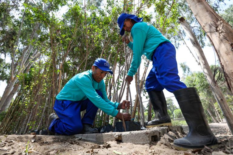 8 pasos para plantar tu propio árbol