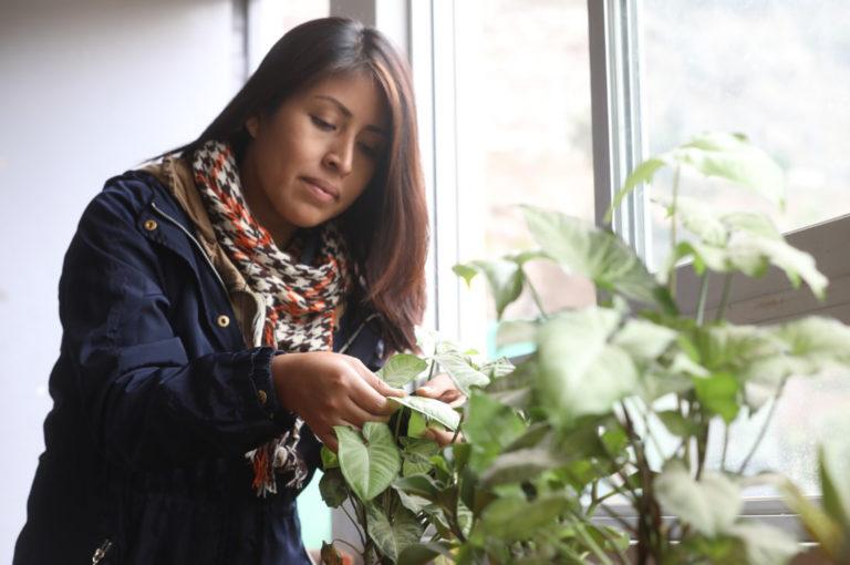 Recomendaciones para cuidar tus plantas en invierno