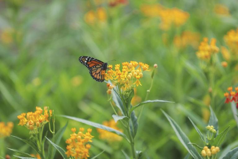 Superamos la producción de 100 mil plantas ornamentales en este 2020