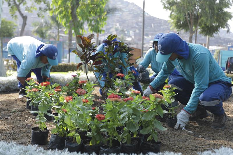 Producimos a la fecha más de 100 mil plantas ornamentales