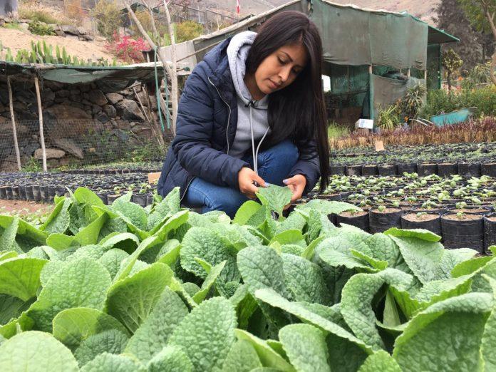 Aprendiendo a cultivar plantas medicinales