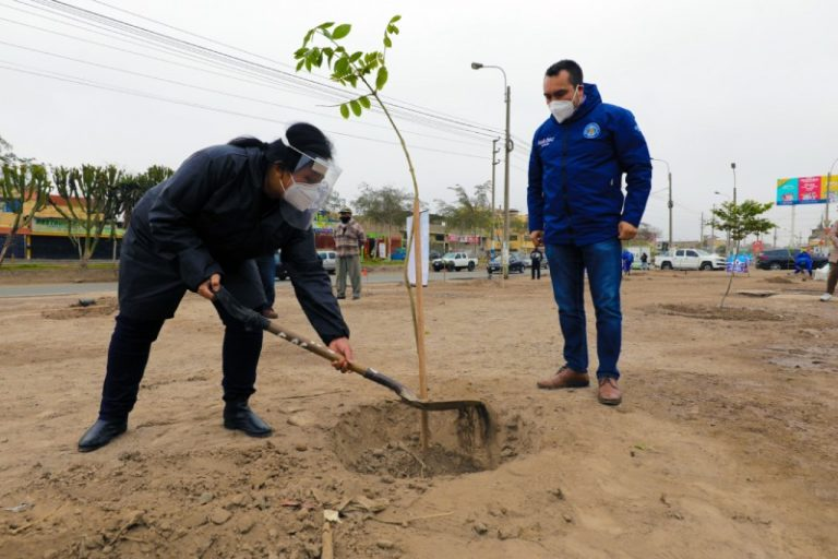 Día del Árbol: Serpar plantó 200 especies en Comas