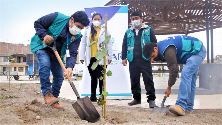 Árboles para Lima: Serpar plantó 100 árboles en distrito de Santa Rosa