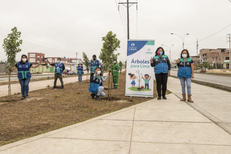 Árboles para Lima: se plantarán 3,000 molles costeños en Villa El Salvador