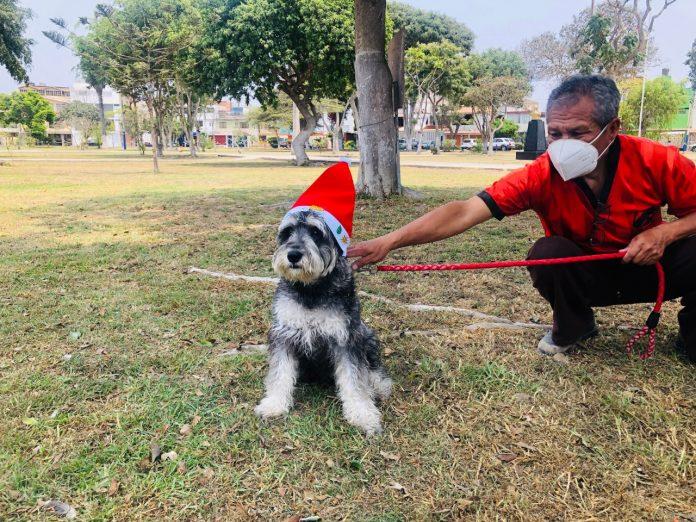 Navidad entre patitas