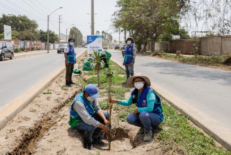Serpar plantó más de 350 árboles en varios distritos  esta semana