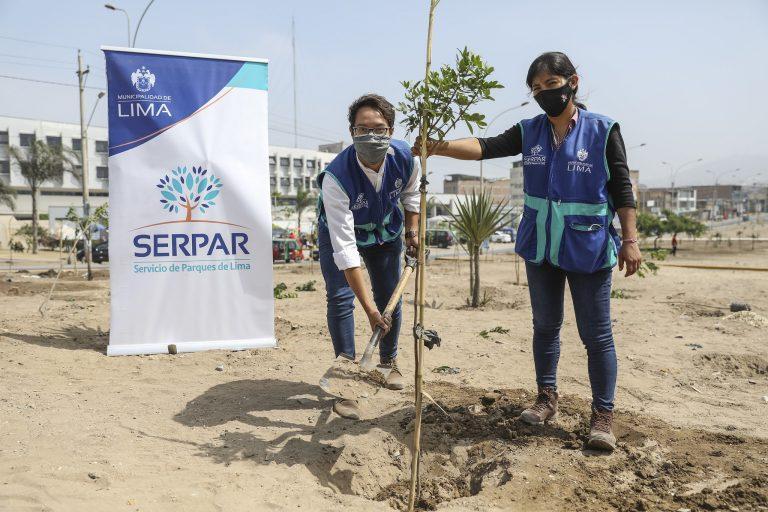 Serpar plantó 500 árboles en la Av. 200 Millas en Villa El Salvador