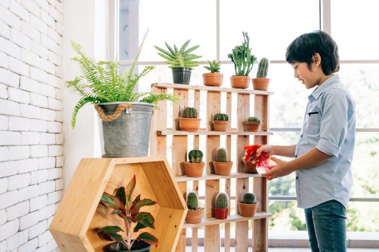 10 cosas que debes aprender sobre el cuidado de plantas