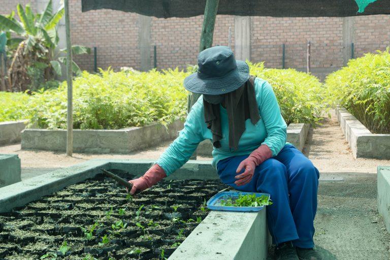 La Hora del Planeta: Conoce el proceso de producción para arborizar la ciudad