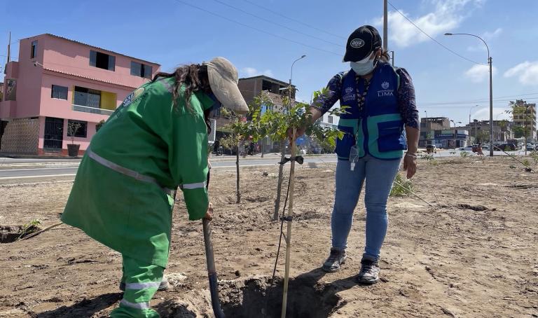 Serpar plantará 700 árboles en la Av. César Vallejo en Villa El Salvador