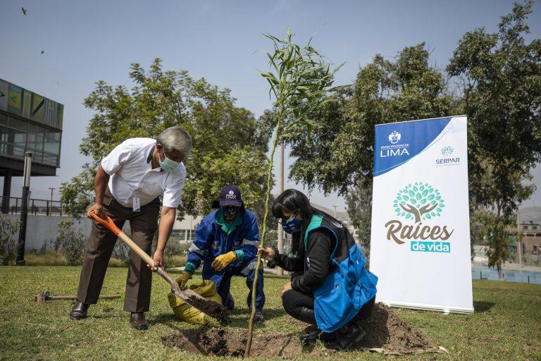 Raíces de Vida: Planta un árbol en memoria de un ser querido y otros motivos especiales