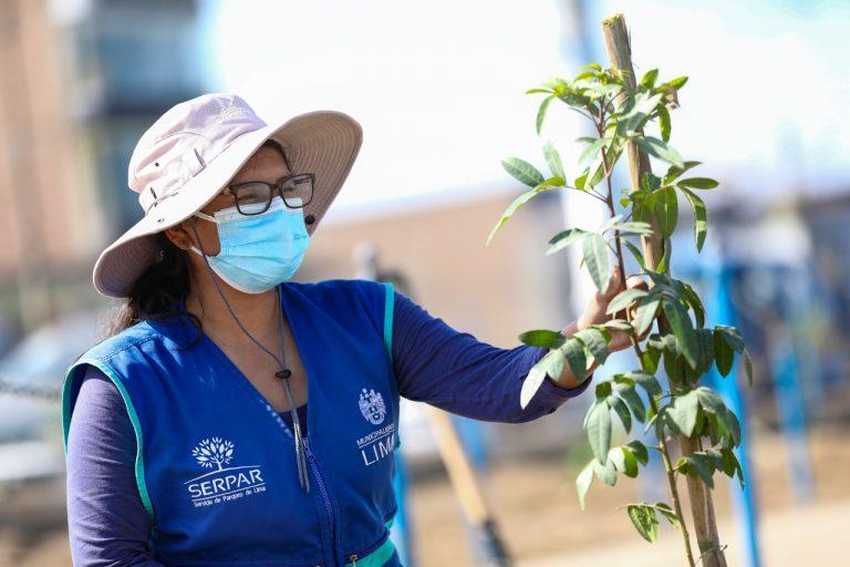 Serpar plantará 1,500 árboles en la Av. Separadora Industrial en Villa El Salvador