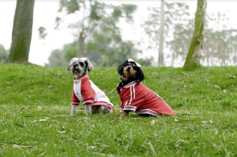 Serpar organiza concurso canino de disfraces en los clubes zonales