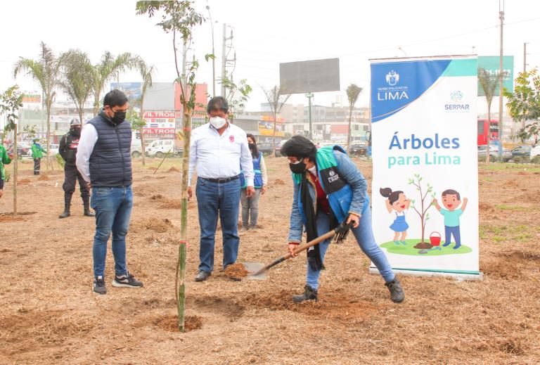 Plantamos más de 200 árboles en el óvalo Arriola de La Victoria