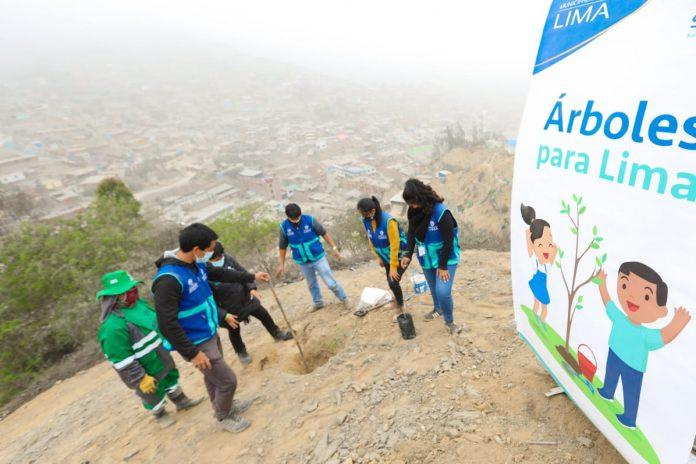 Día del Árbol se celebró con una plantación en Huaycán