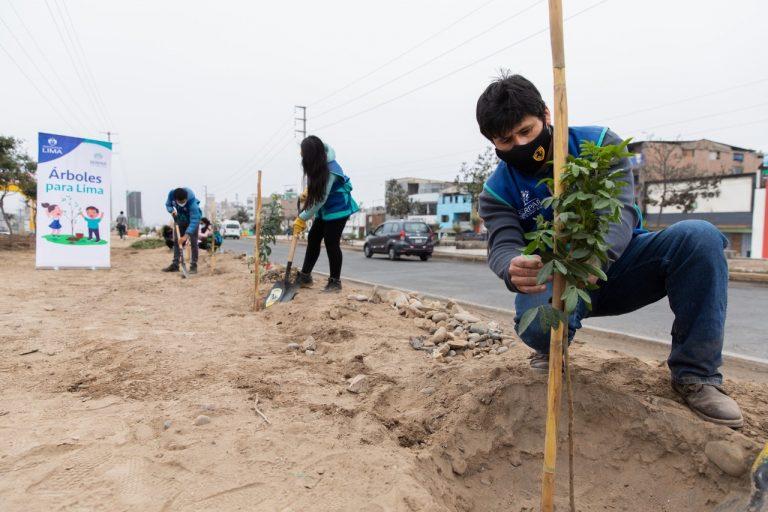 Árboles para Lima: Serpar realizó más de 400 mil plantaciones desde el 2019