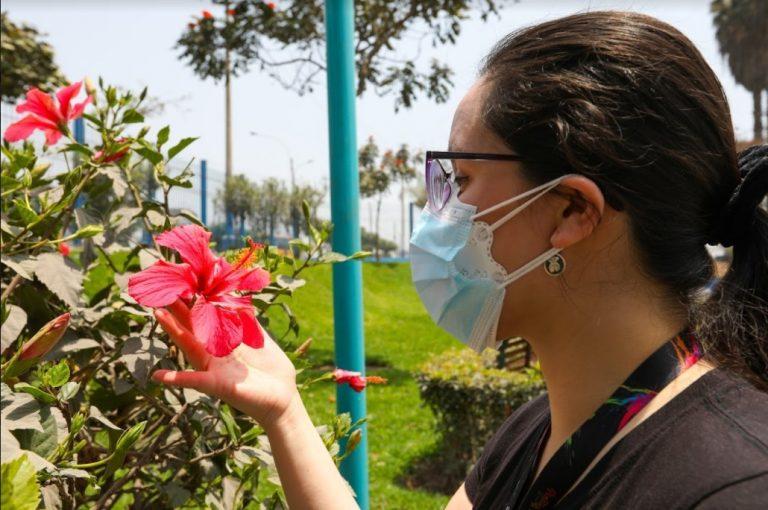 Flores de primavera: Conoce las plantas que puedes tener en casa